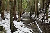 寶雲島迦納山(Mt Gardner of Bowen Island):水流豐沛的山溪