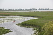霹靂角國家公園(Point Pelee N.P.):19Marshville水道.jpg