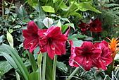 布查花園(Butchart Gardens):暖房中的花朵