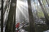寶雲島迦納山(Mt Gardner of Bowen Island):穿透密林的陽光