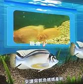 海洋科技博物館:16吳郭魚 完全養殖的代表.jpg