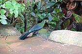 維多利亞的蝴蝶園:14待查鳥1.JPG