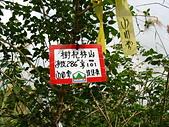2012的山林旅歷:樹杞林山.jpg