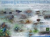 社子島基隆河單車行:水邊的小型鳥
