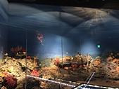 海洋科技博物館:11大海中的生命.jpg