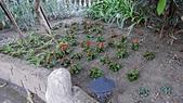 水花園社區隨拍:園藝認養成果1