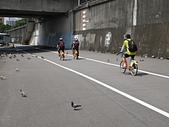 基河左岸單車行:民權大橋下不怕人的滿地鴿子