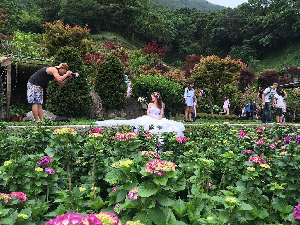 27拍攝婚紗.jpg - 20160522竹子湖繡球花