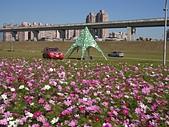 大台北都會公園:大波斯菊與違規轎車.jpg