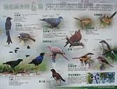 社子島基隆河單車行:堤邊農舍的鳥