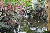 維多利亞的蝴蝶園:16園內水池.JPG