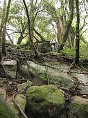 加里山、哈堪尼山O形:加哈O形11九號椿石壁及巨木.jpg