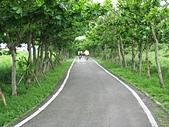 十七公里海岸線:綠色隧道