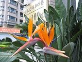 水花園社區隨拍:天堂鳥--社區門口.jpg