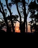 老樹農地:老樹夕照