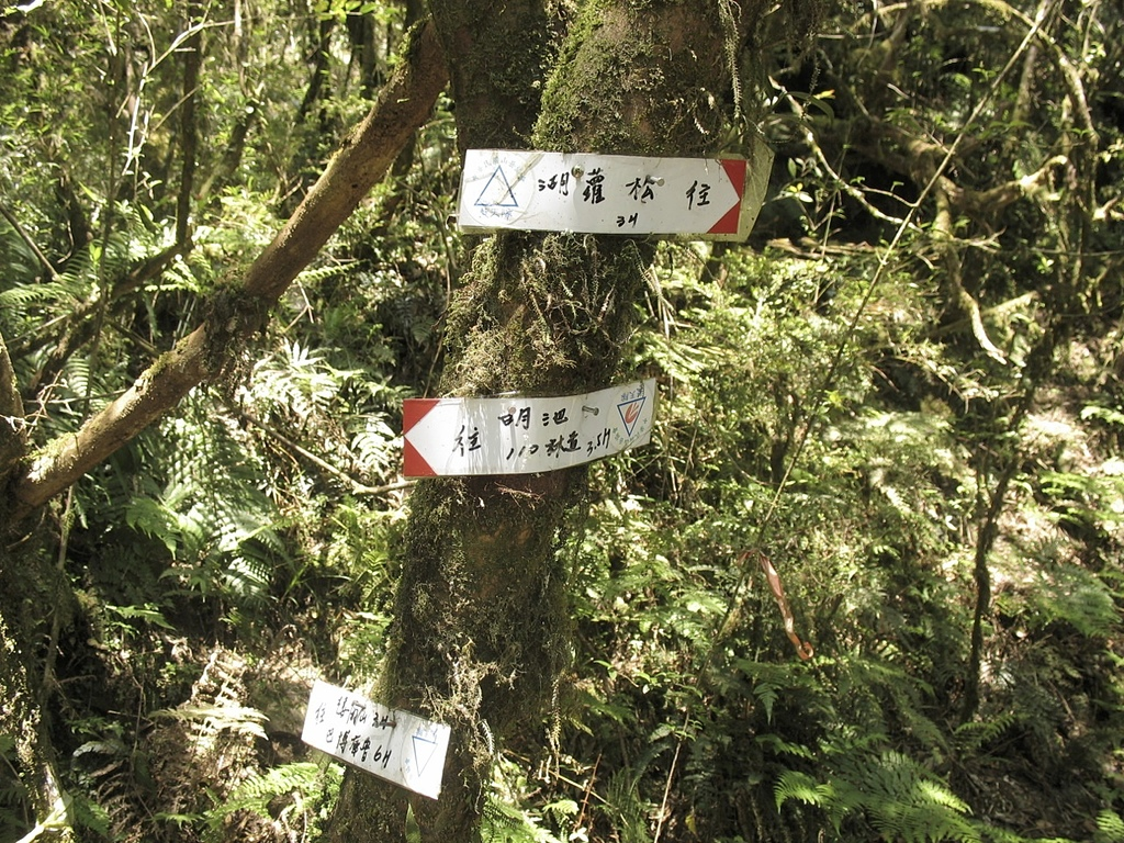 巴棲松縱走:35松羅湖110林道叉.jpg