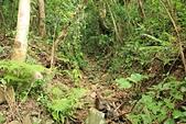 蘭嶼紅頭山(小百岳#97):09借用水路的紅頭山步道.jpg
