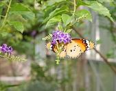 台北園外園・準園:準園13樺斑蝶2.jpg