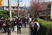 櫻花:陽明山平等里的賞櫻人潮.jpg