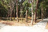 高捷半日遊:原生植物園螢火蟲復育中