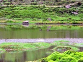 松蘿湖(二):04環湖08松蘿湖鴛鴦.jpg