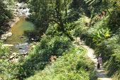 金瓜寮溪魚蕨步道:步道一景1