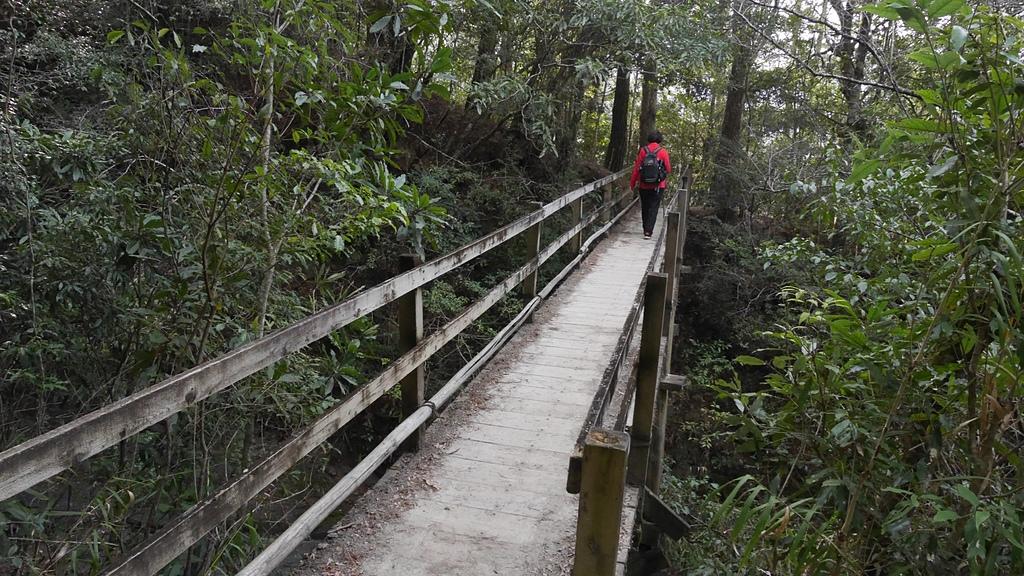 07步道上的木橋2.jpg - 司馬庫斯二日遊之三 司立富瀑布