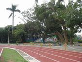 八卦台地基點巡禮:同安國小校園內的怪異樟樹