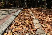 高捷半日遊:原生植物園刻意不清掃的落葉