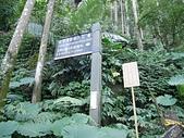 竹東五指山:03橫向步道叉口.jpg