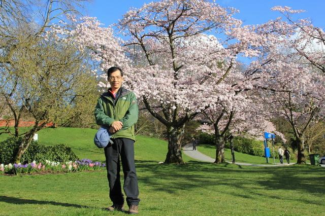 溫哥華QE Park的櫻花7.jpg - 櫻花