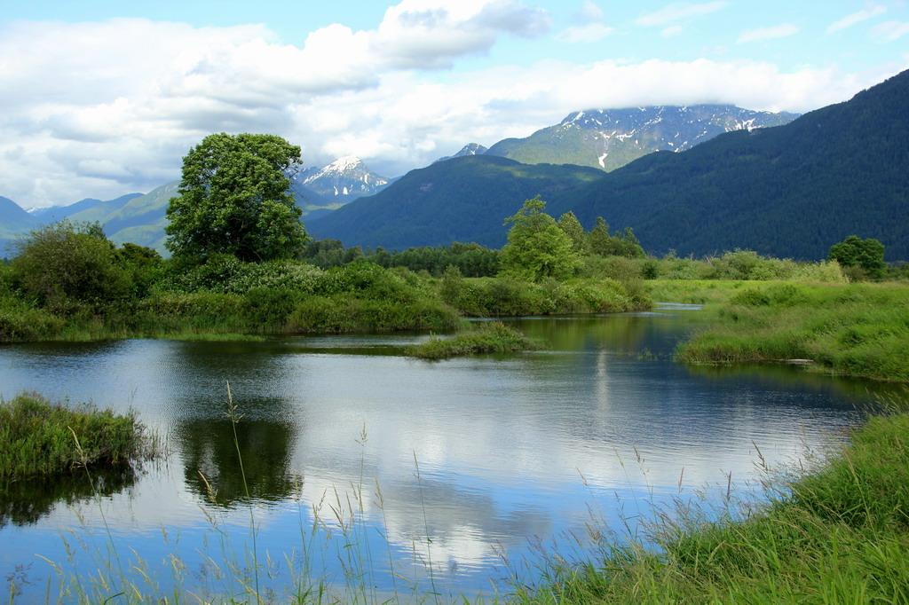 高貴林(Coquitlam)一日遊:Pitt Lake Wetland2