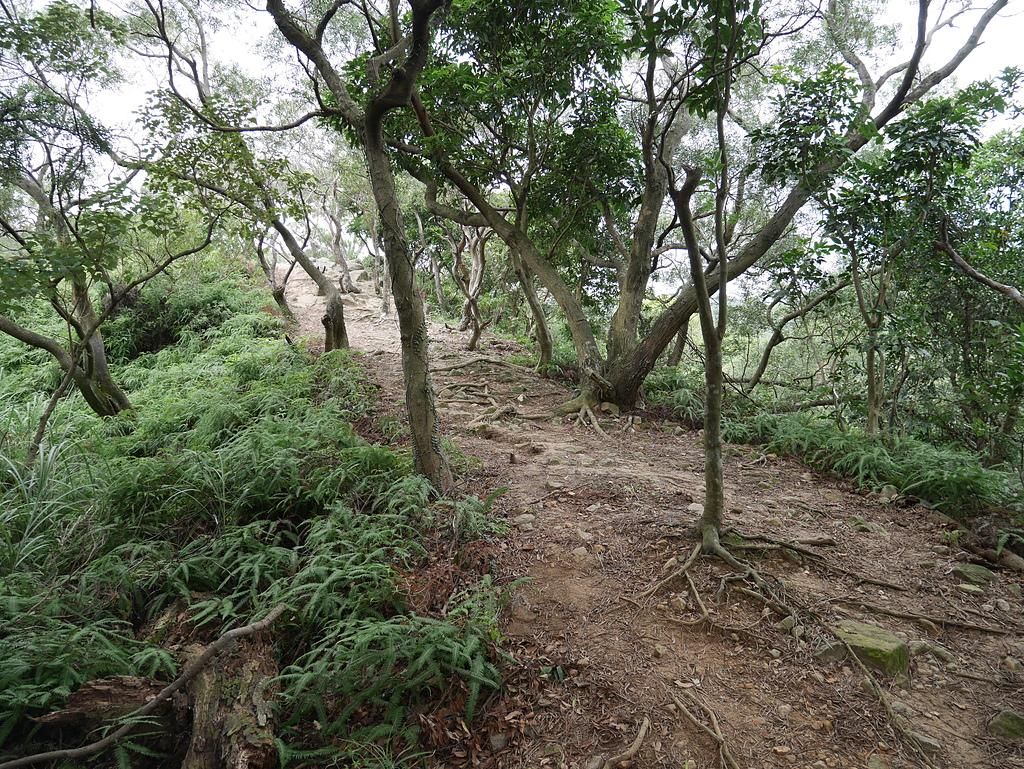 07 劍南路葛霧台稜線山徑A.JPG - 劍南路格物台登文間山