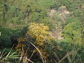 大社觀音山:14山谷中的秋色.jpg