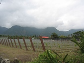 都蘭秘徑月光小棧:都蘭秘徑16新開闢的葡萄園.jpg