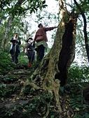 竹東五指山:06樹幹中空的猴不爬巨木.jpg