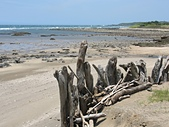 北海岸淡水到石門:17漂流木海灘