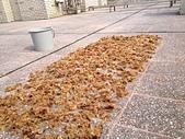 石花菜-->>石花凍:0421曬石花菜第三次1.jpg
