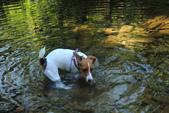 金瓜寮溪魚蕨步道:喜歡玩水的豆豆