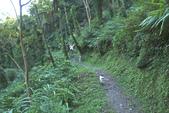 金瓜寮溪魚蕨步道:很多筆筒樹的賞蕨步道