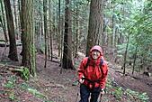 寶雲島迦納山(Mt Gardner of Bowen Island):走在舖滿松針的松木林中