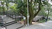 劍潭山步道行動尾牙:04巨大的橄欖樹.jpg