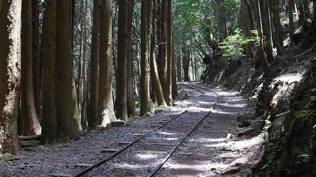 32穿過密林的鐵道.jpg - 2015玉山行側記