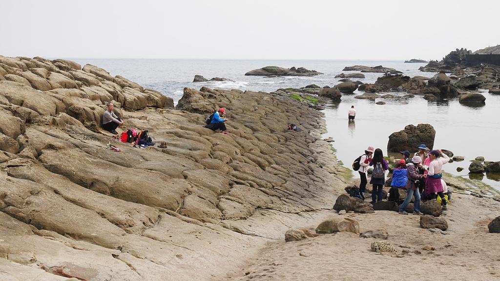 45在潮間帶休息的貿經人馬.jpg - 潮境公園 望幽谷