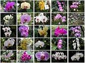台北園外園・準園:準園11品種繁多的蘭花.jpg