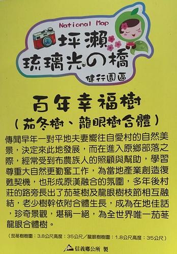 12百年幸福樹1.jpg - 坪瀨・琉璃光之橋 健行園區