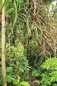 蘭嶼紅頭山(小百岳#97):15更多的山林投.jpg