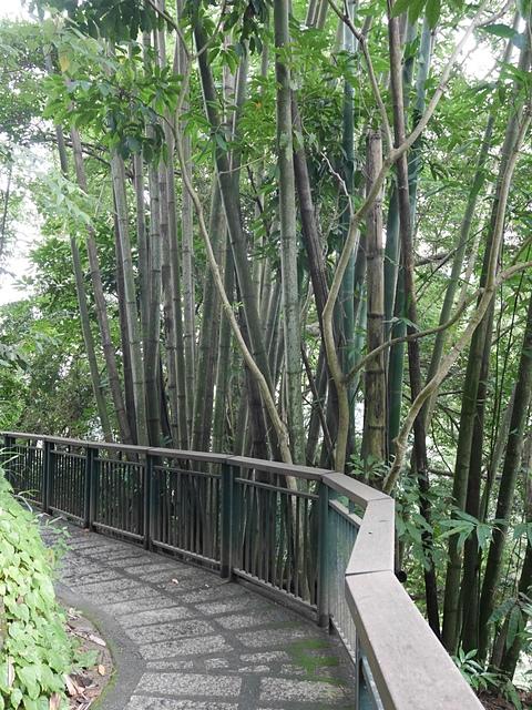 14健行步道的竹林.jpg - 坪瀨・琉璃光之橋 健行園區
