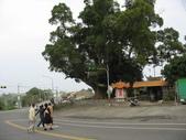 八卦台地基點巡禮:老樟母女樹