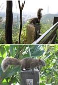 南港山小縱走:16象山步道上的松鼠3.jpg